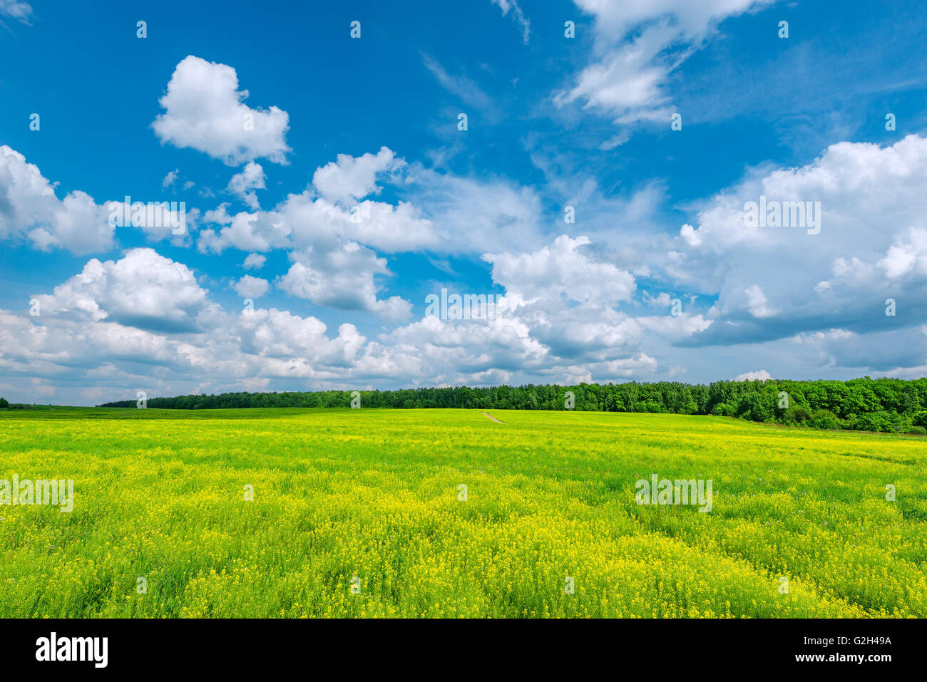 Field with flowers at hot day summer time. - Stock Image