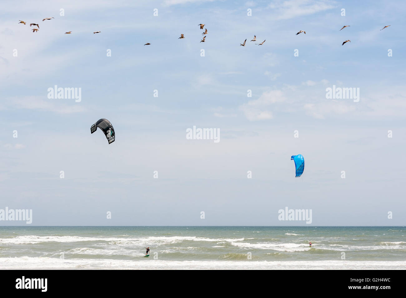 Pelicans and kitesurfers share the sky on a St. Augustine beach in North Florida. (USA) - Stock Image