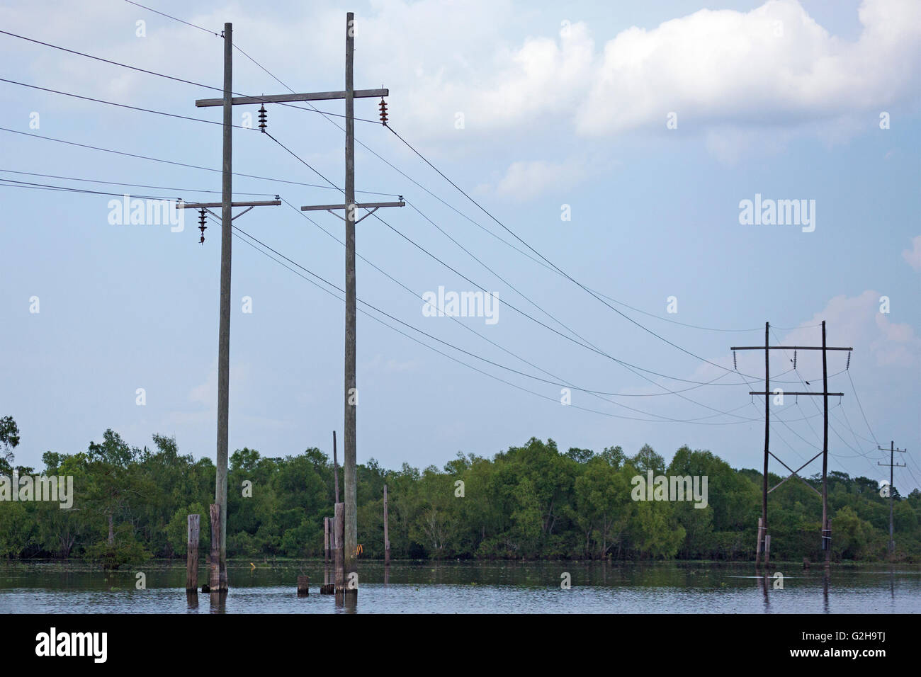 Power lines crossing Atchafalaya Swamp, the largest wetland in the United States - Stock Image