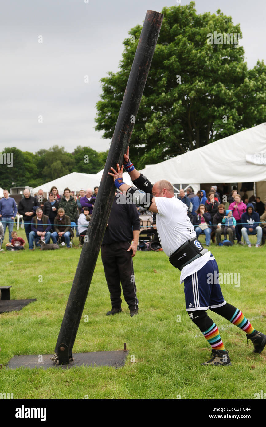 Bywell, England - May 30, 2016: A competitor in the pairs event of the Strong Man competition lifting a 200kg steel - Stock Image