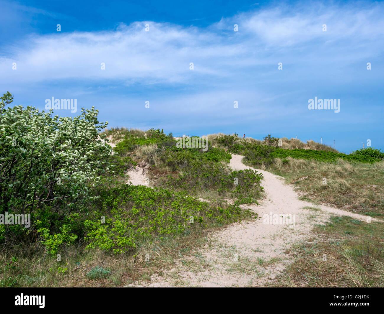 Sand dunes in the popular resort Hornbæk in North Zealand, Denmark, Scandinavia, Europe - Stock Image