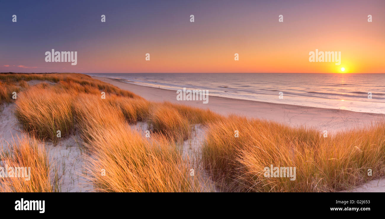 Tall dunes with dune grass and a wide beach below. Photographed at sunset on the island of Texel in The Netherlands. - Stock Image