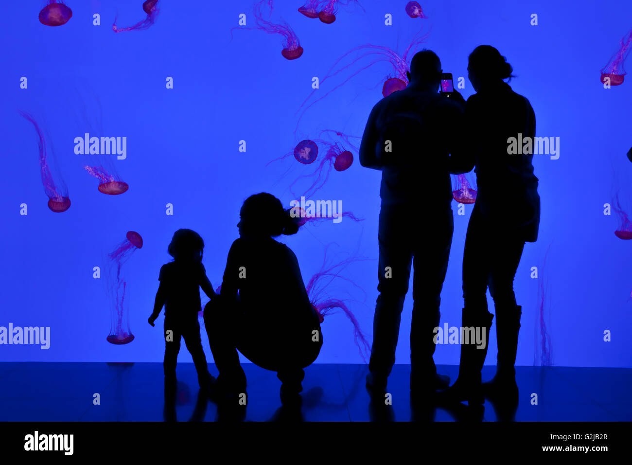 Visitors view jellyfish in Planet Jellies Gallery at Riply's Aqarium of Canada at base of CN Tower, Toronto, - Stock Image