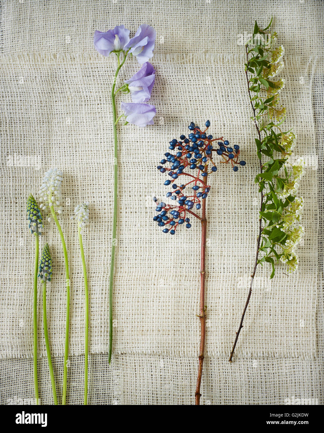 Wildflower Stems on Gauze Fabric - Stock Image