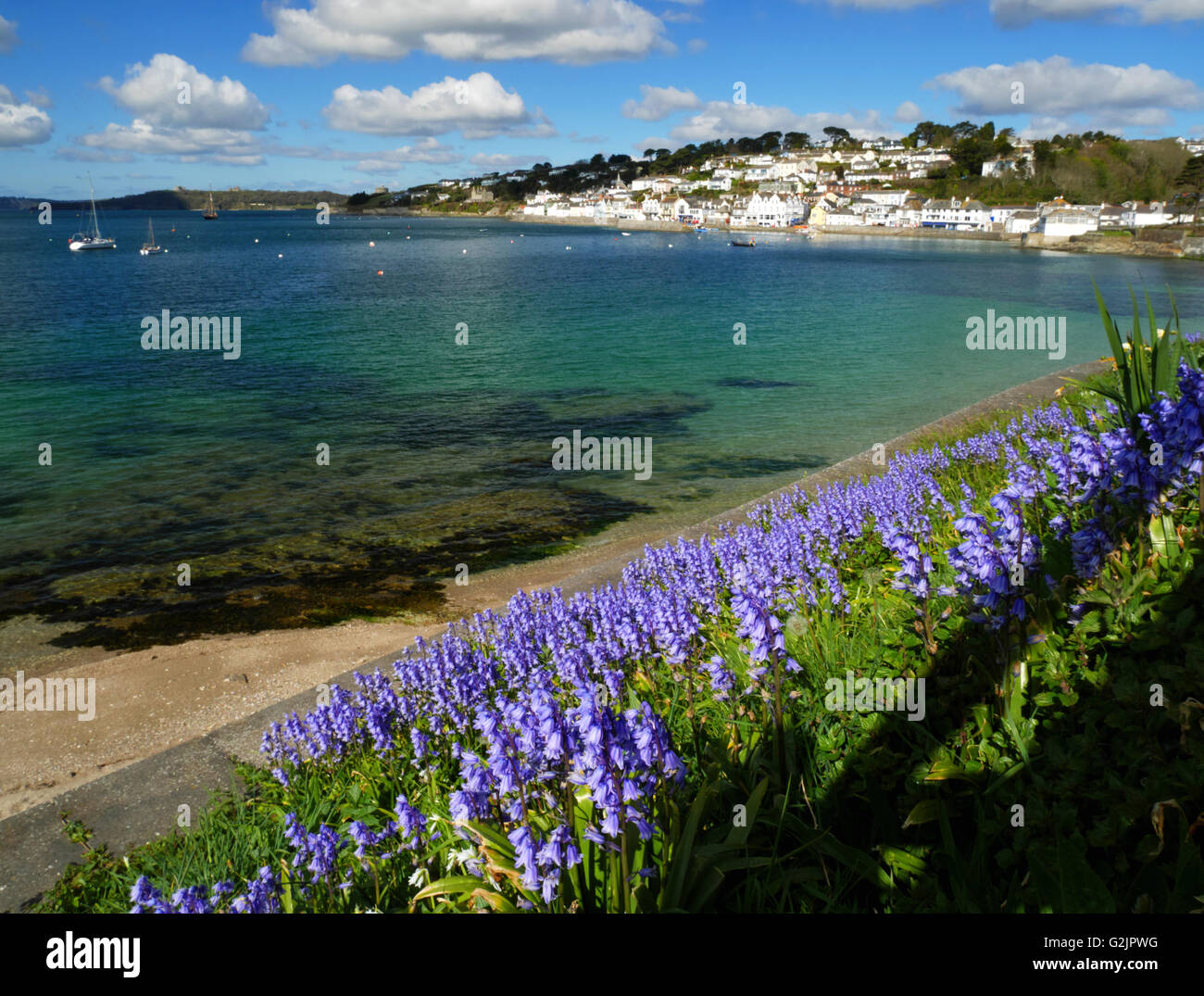 Bluebells grow beside the sea at St Mawes, Cornwall. - Stock Image