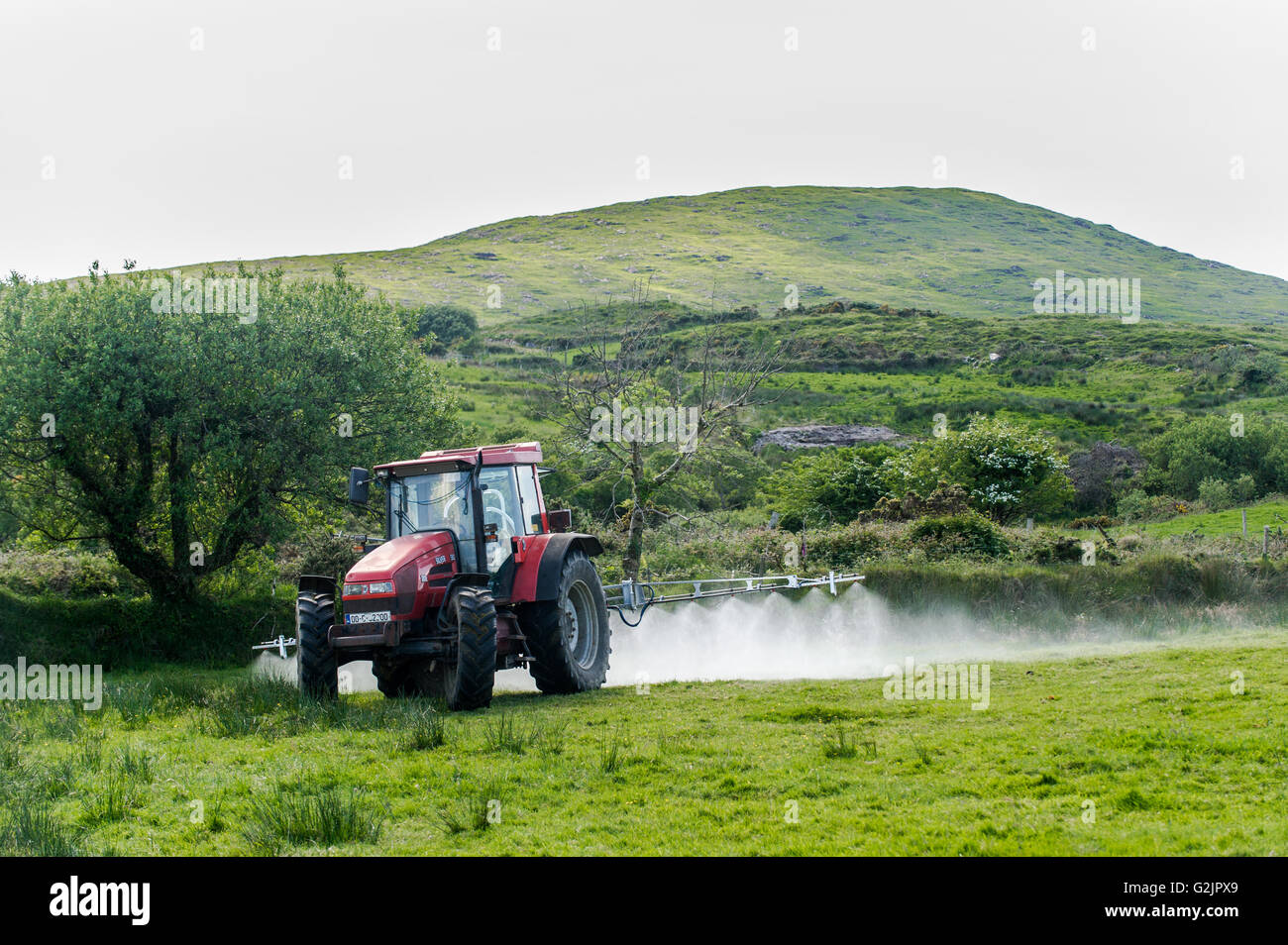 Farmer sprays bulrushes or rushes with weed killer with Mount Corrin in the background in Ballydehob, West Cork, - Stock Image