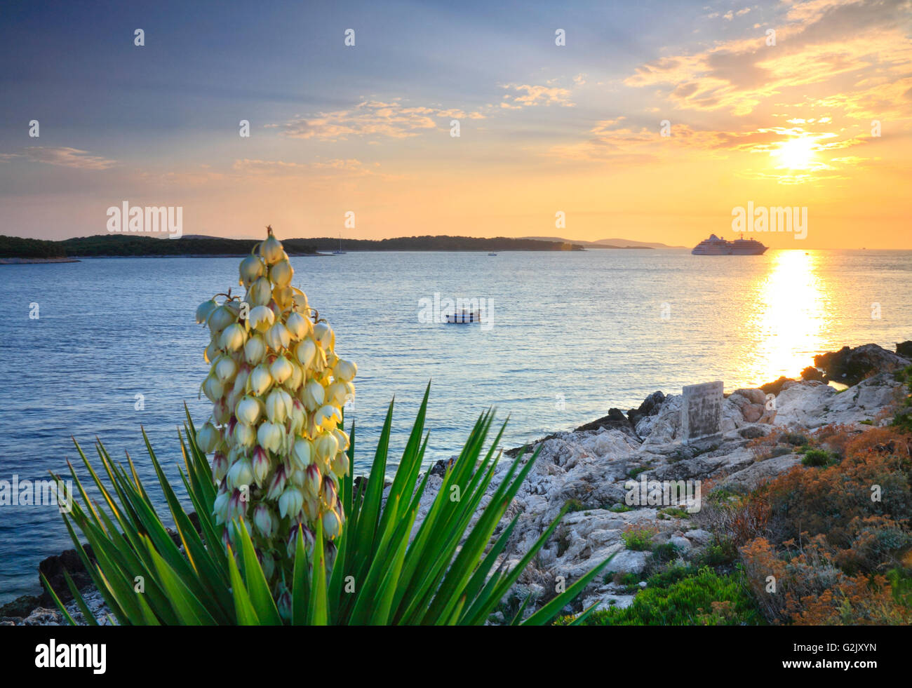Sunset on island Hvar with beautiful Yucca palm in bloom in Croatia - Stock Image
