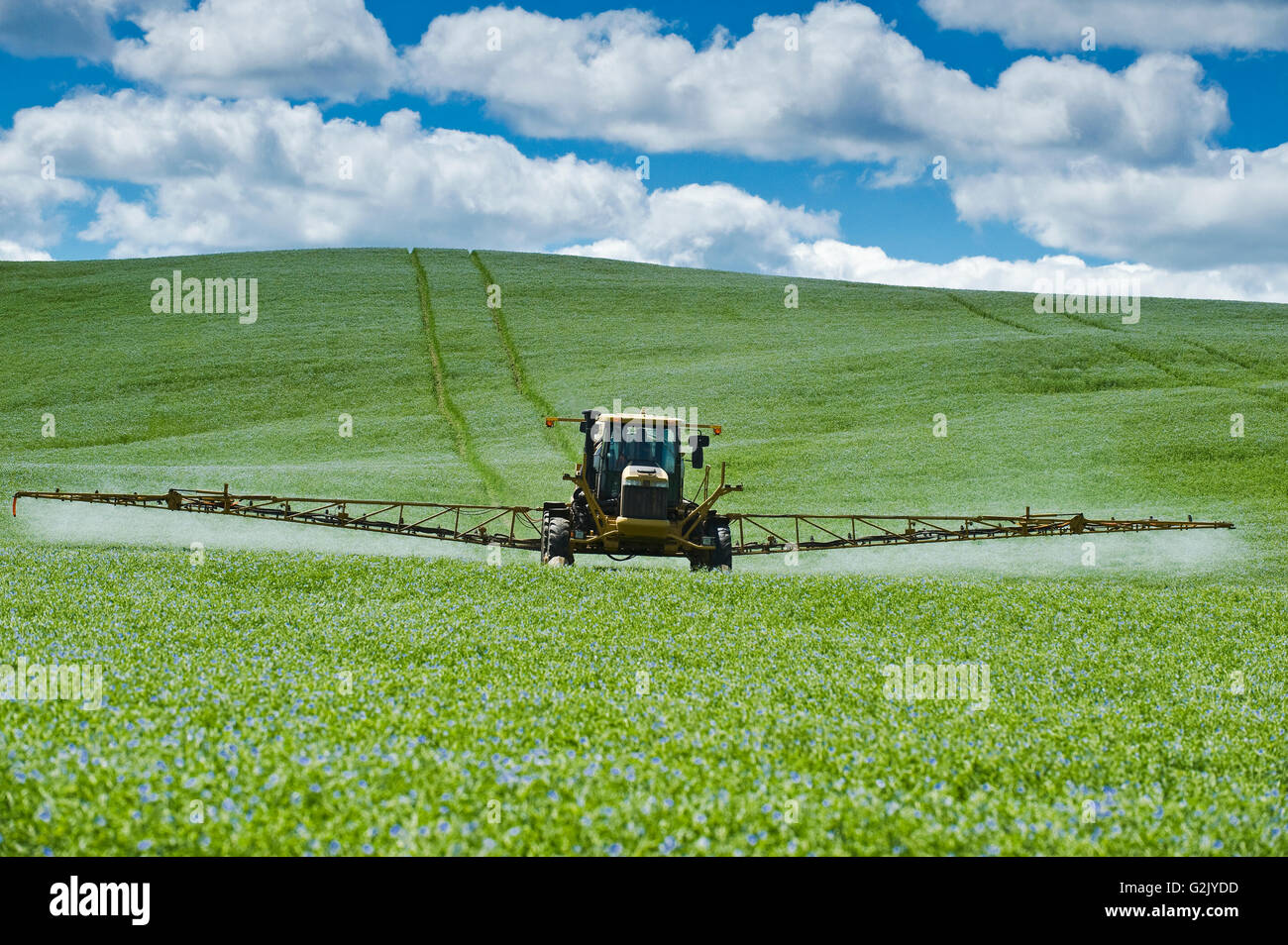 a high clearance sprayer applies a chemical application of fungicide to a flax field, Tiger Hills, Manitoba, Canada - Stock Image