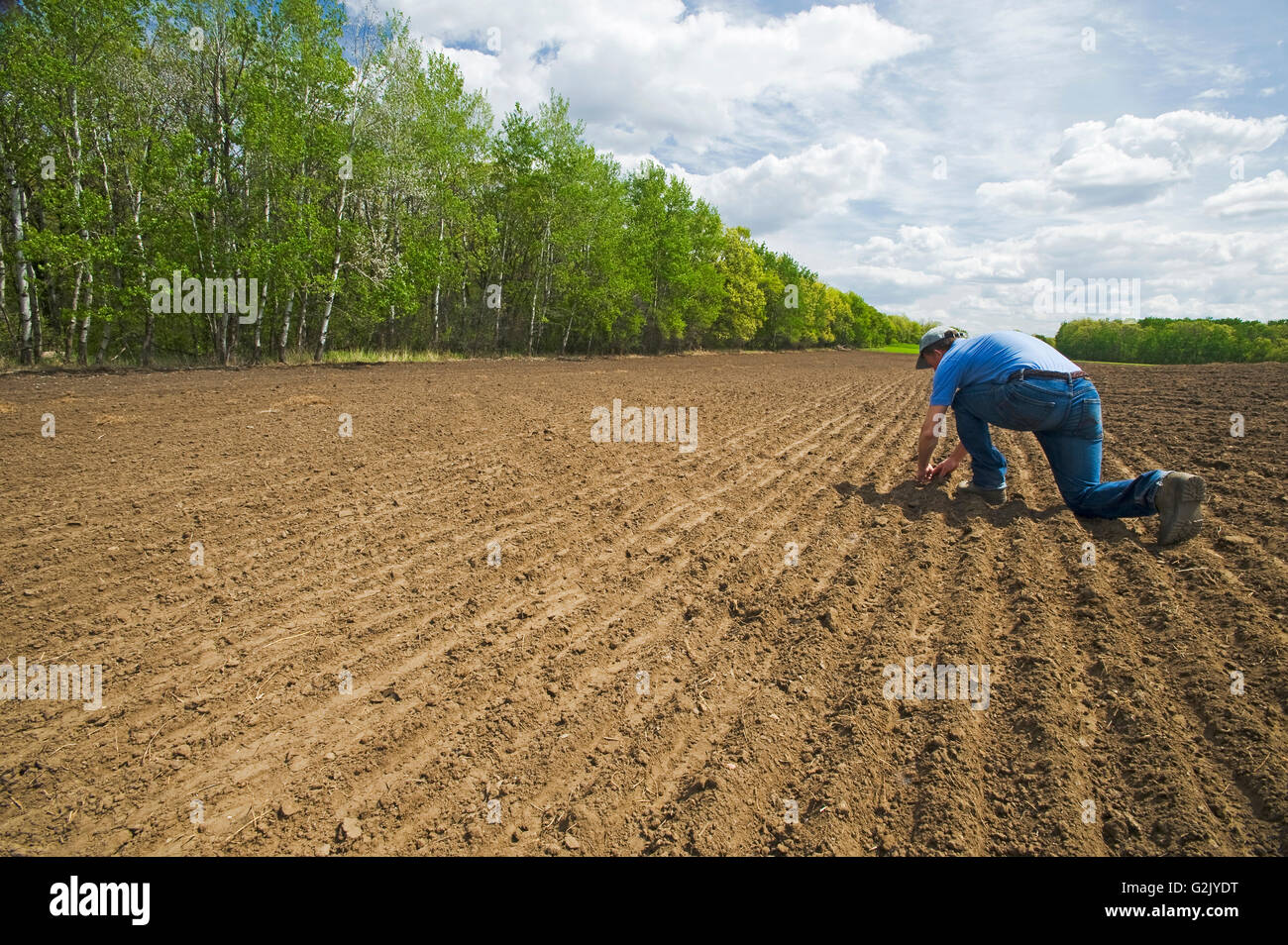 a farmer scouts a newly seeded wheat field, Tiger Hills, Manitoba, Canada - Stock Image