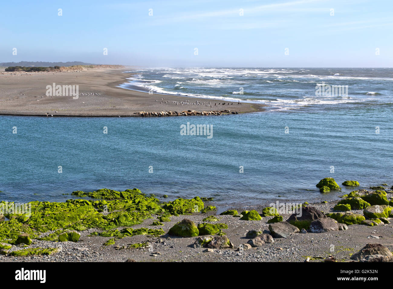 Mouth of the Smith River, Pacific ocean, harbor seals, sea lions, seagulls & double-crested cormorants resting - Stock Image