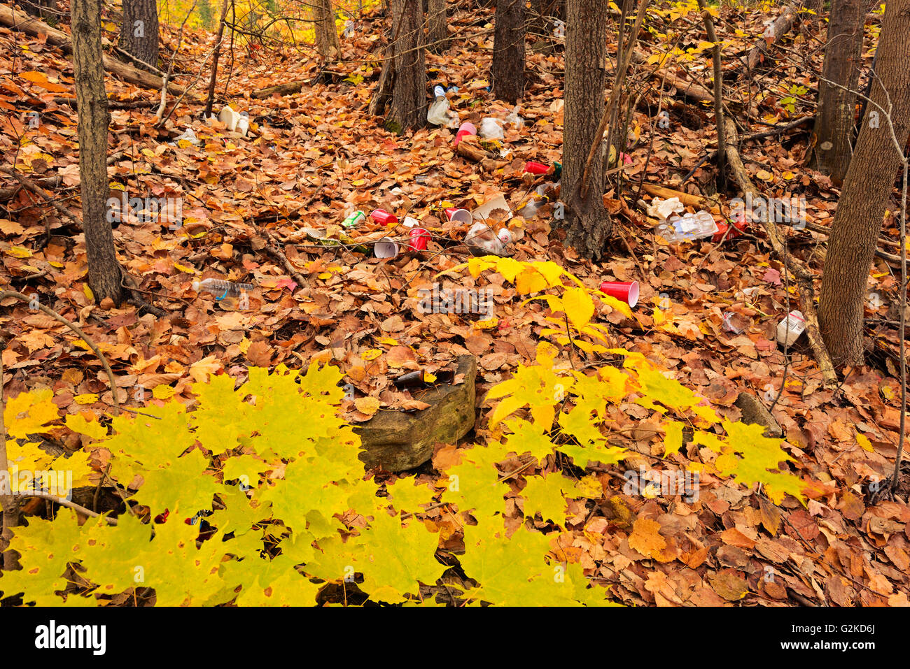 Garbage littering a hardwood forest in autumn Dorset Ontario Canada - Stock Image