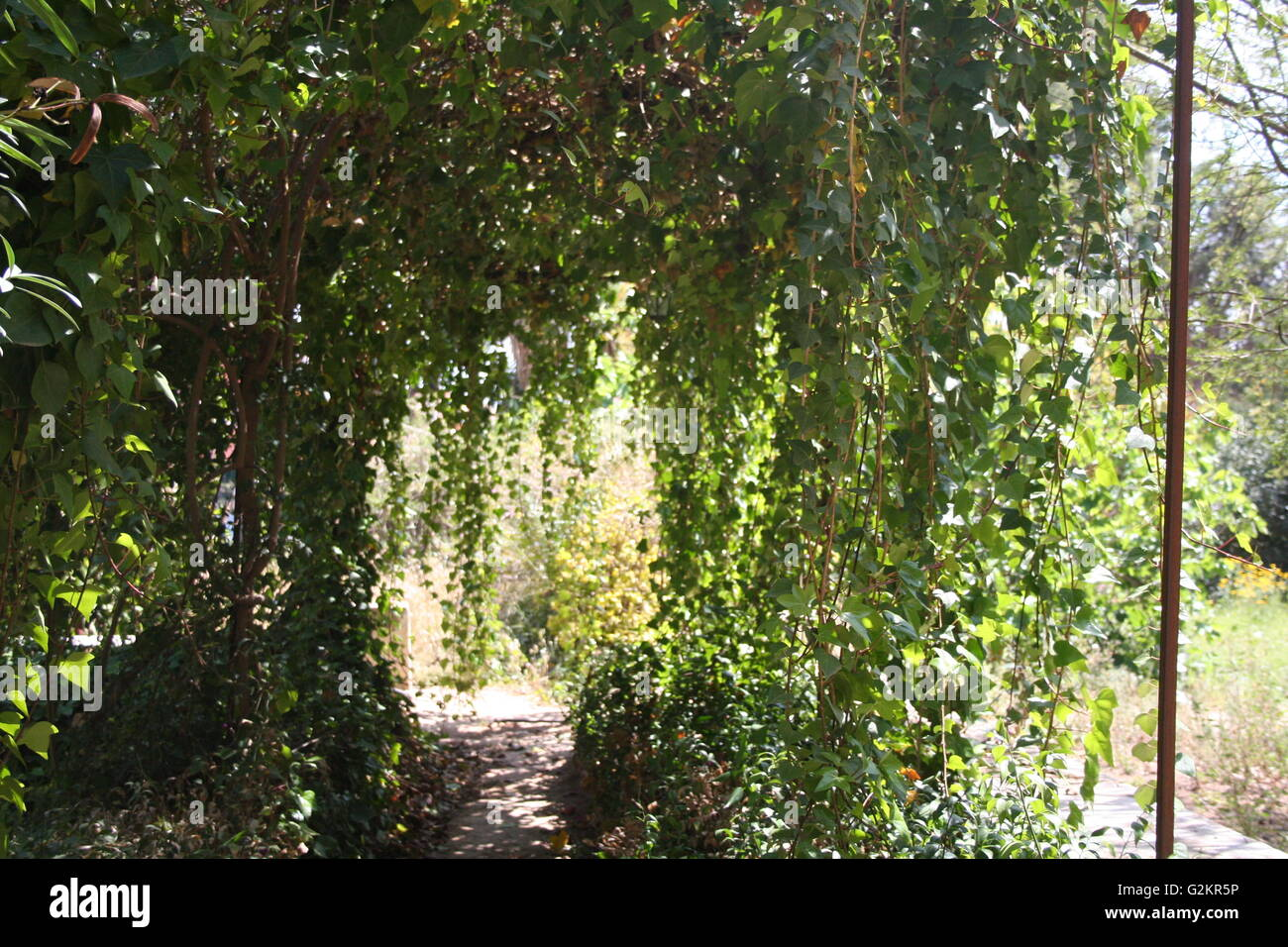 Trees hanging in a pathway - Stock Image