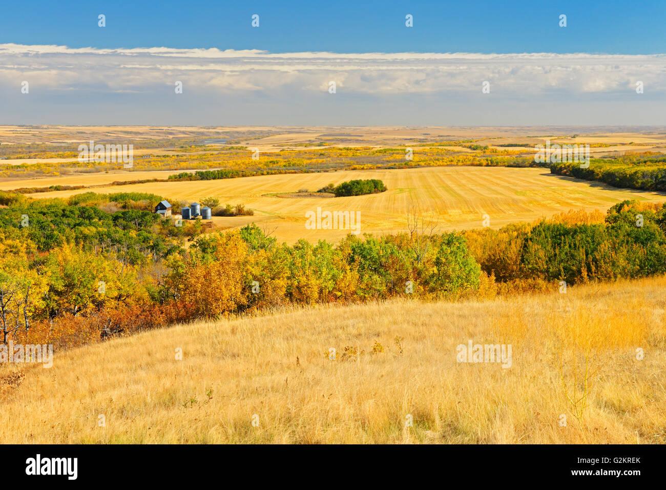 Farmland of 'Bolton Farm' Baljennie Saskatchewan Canada - Stock Image