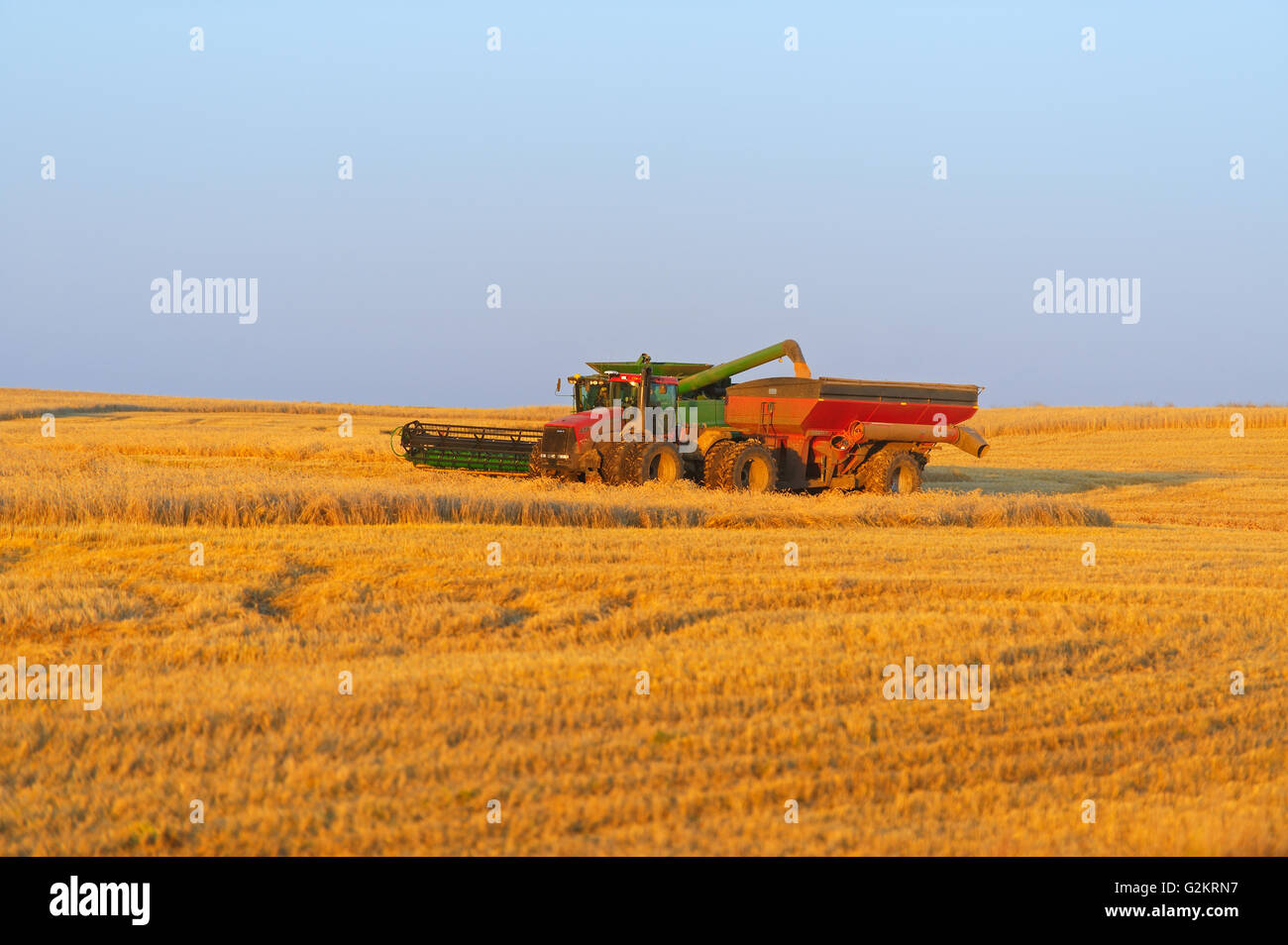 Unloading wheat (var. Infinity) into grain cart north of Grenfell Saskatchewan Canada - Stock Image