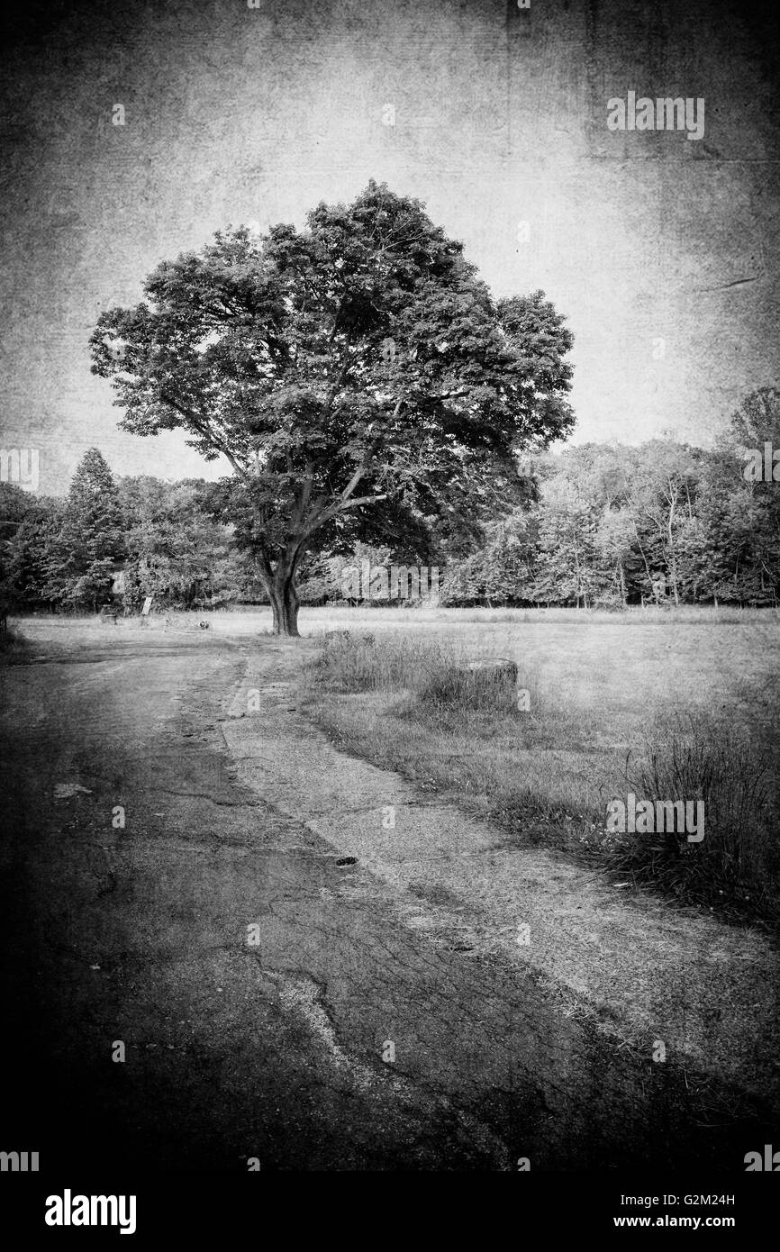 landscape with tree and path with vintage grunge texture in black and white - Stock Image