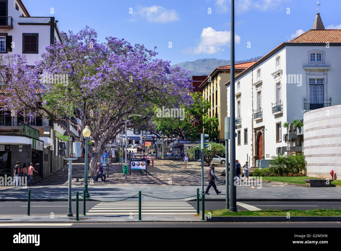Avenida do Mar, Funchal - Stock Image