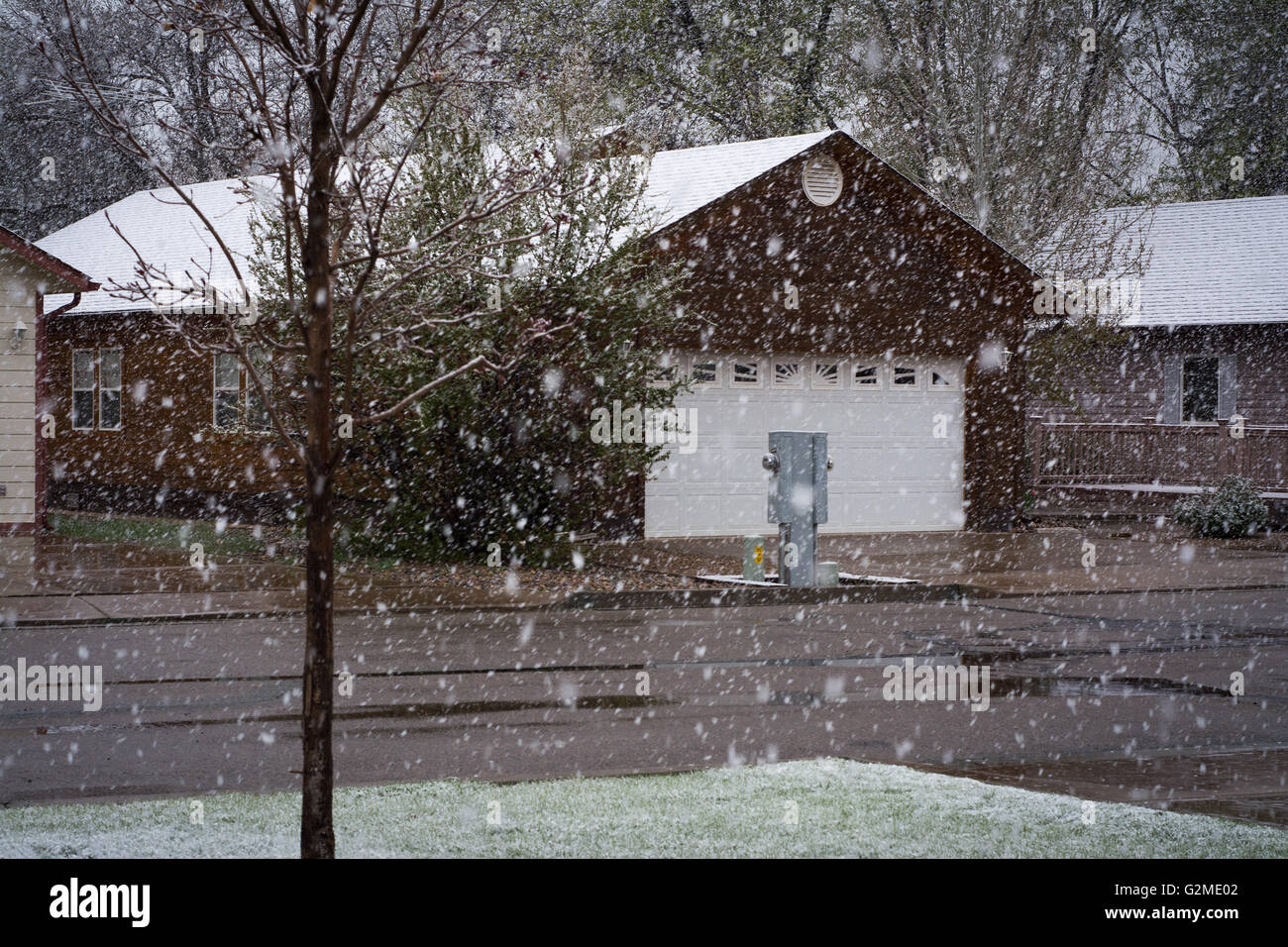 Snow in May in Dolores, Colorado, USA - Stock Image