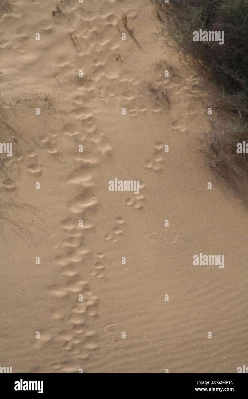 A sandy path with footprints and animal tracks - Stock Image