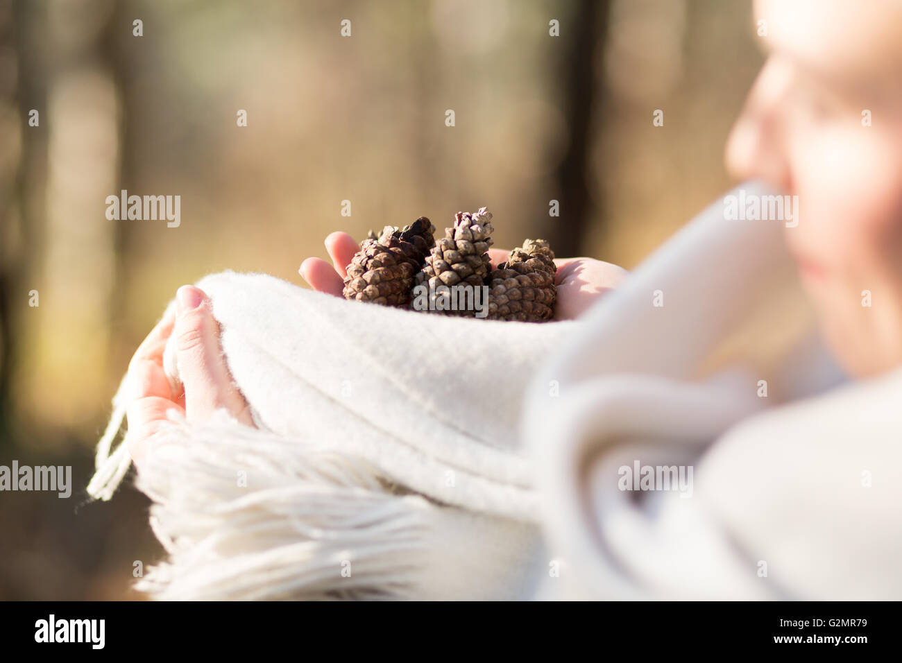 pinecones in the hands - close up - Stock Image