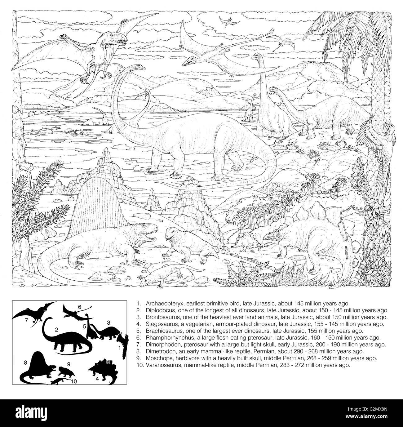 Prehistoric Animal Scene (black on white line drawing), with explanatory key. - Stock Image