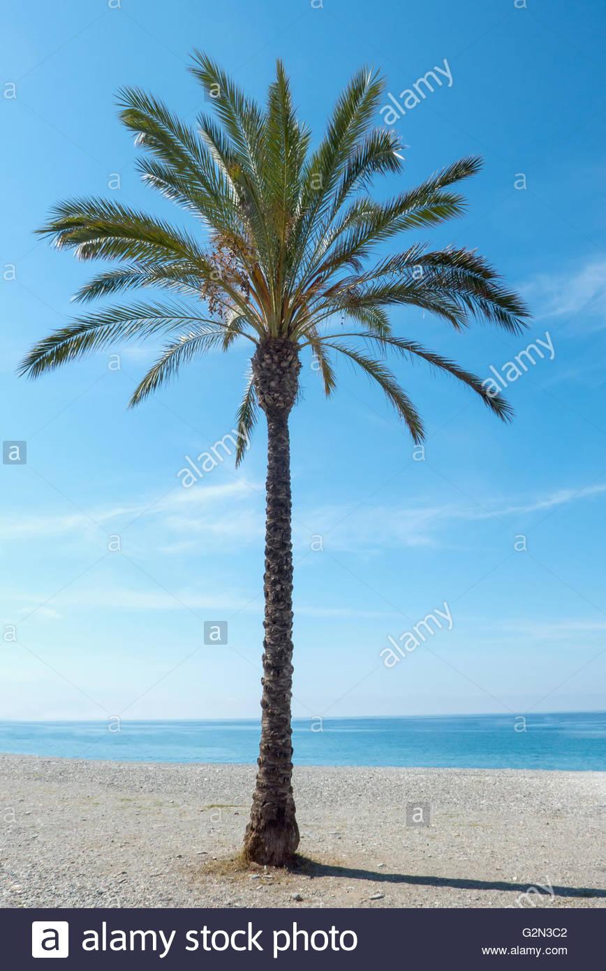 La Granja Palm Beach