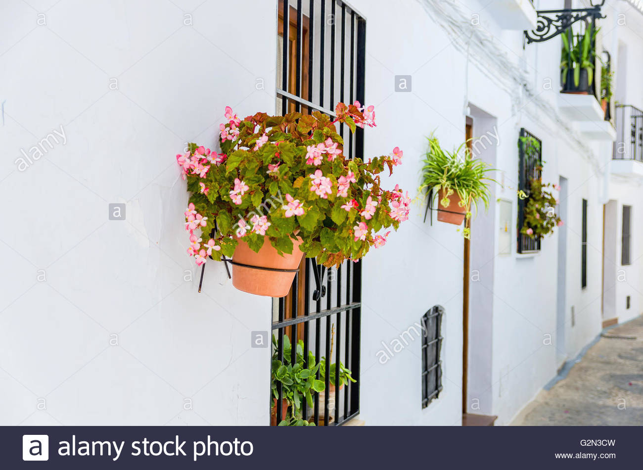 Close Up Of Beautiful Potted Flowers On White Wall Outdoor Stock
