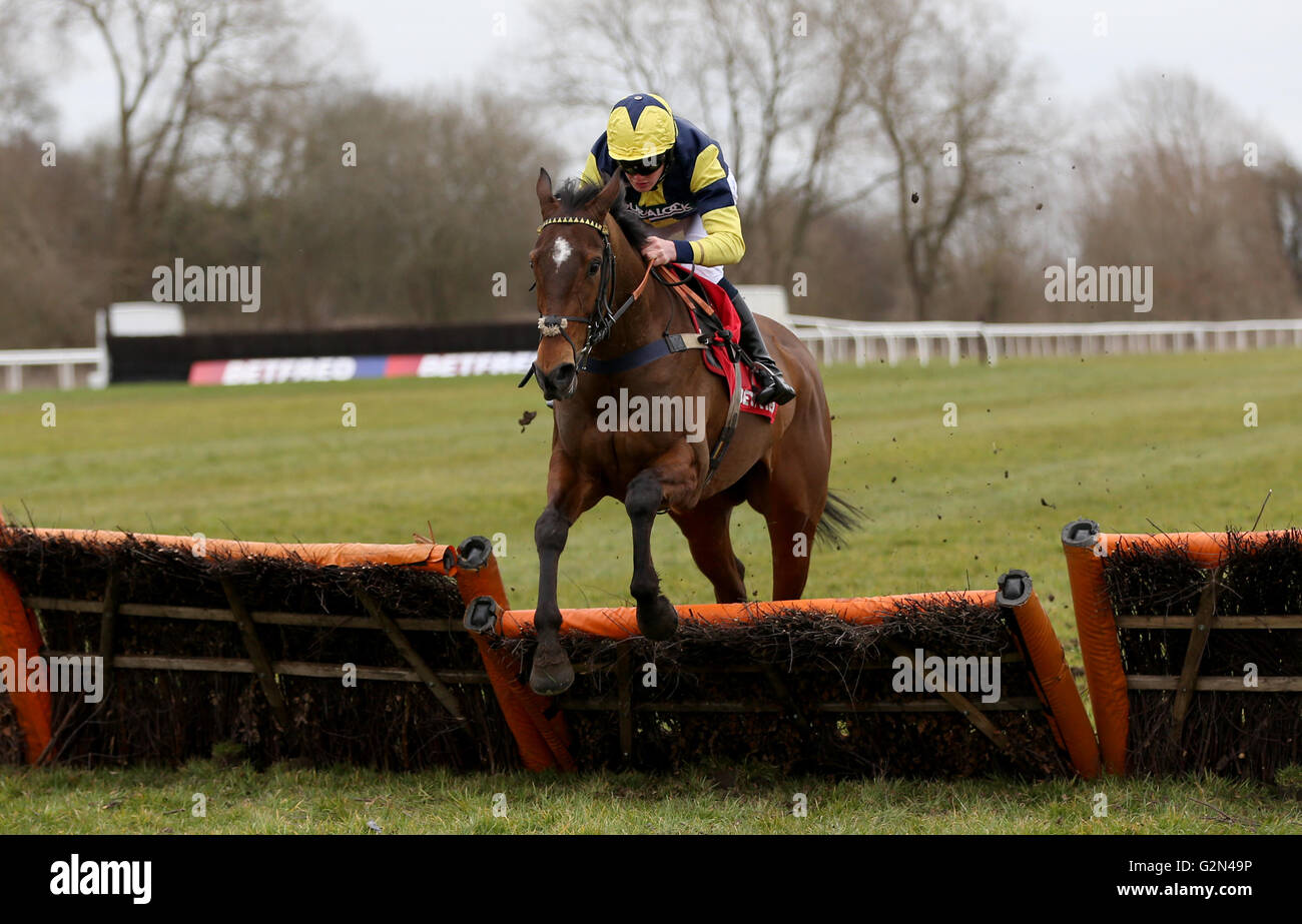 Masterplan ridden by Graham Watters - Stock Image