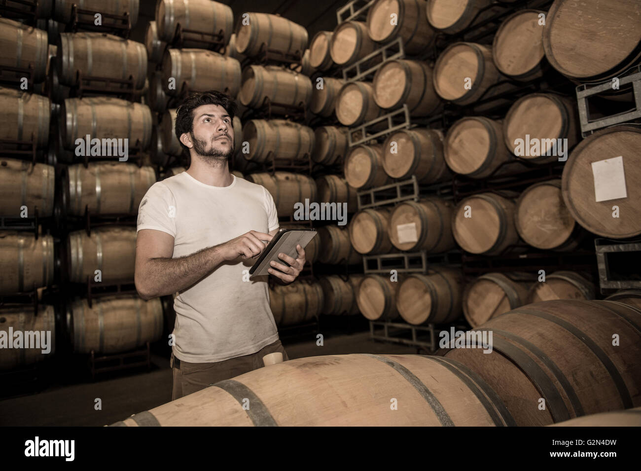 Winemaker counting the barrels with a tablet in large storage - Stock Image