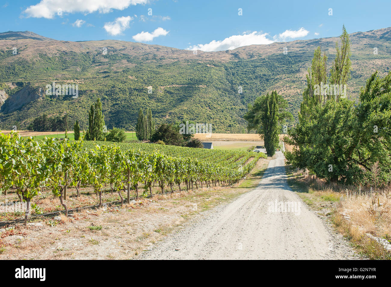 Gibbston Valley in Central Otago wine region on the South Island in New Zealand - Stock Image