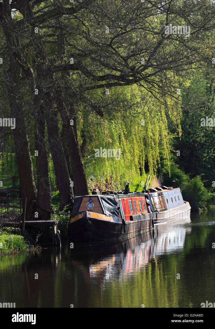 Narrowboats moored near Cookley on the Staffordshire and Worcestershire canal, Worcestershire, England, Europe Stock Photo
