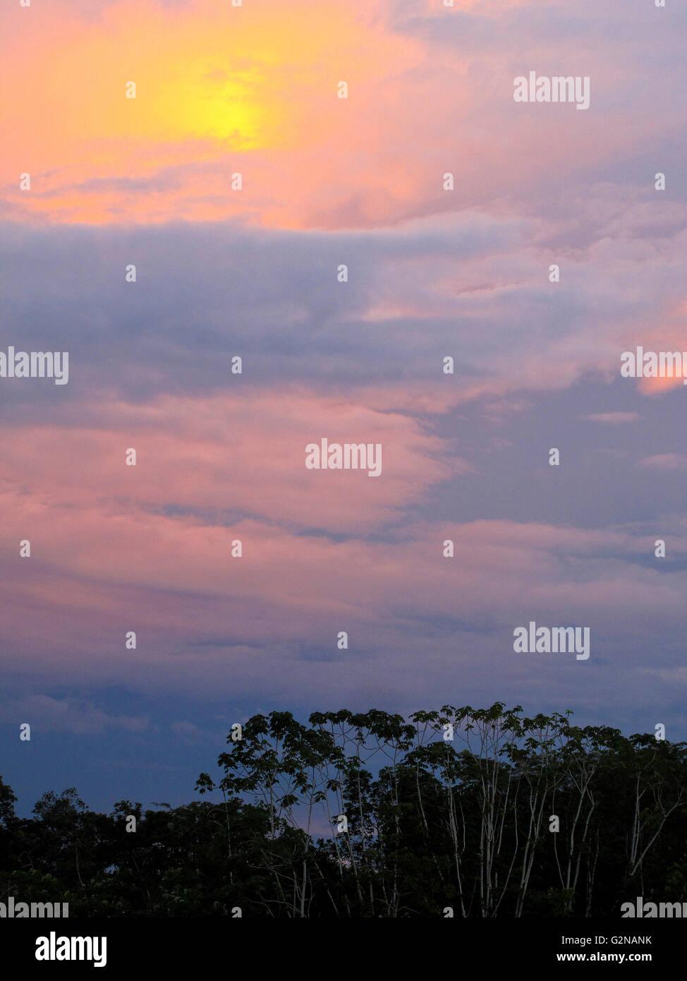 Angamos. Amazon forest. Peru - Stock Image
