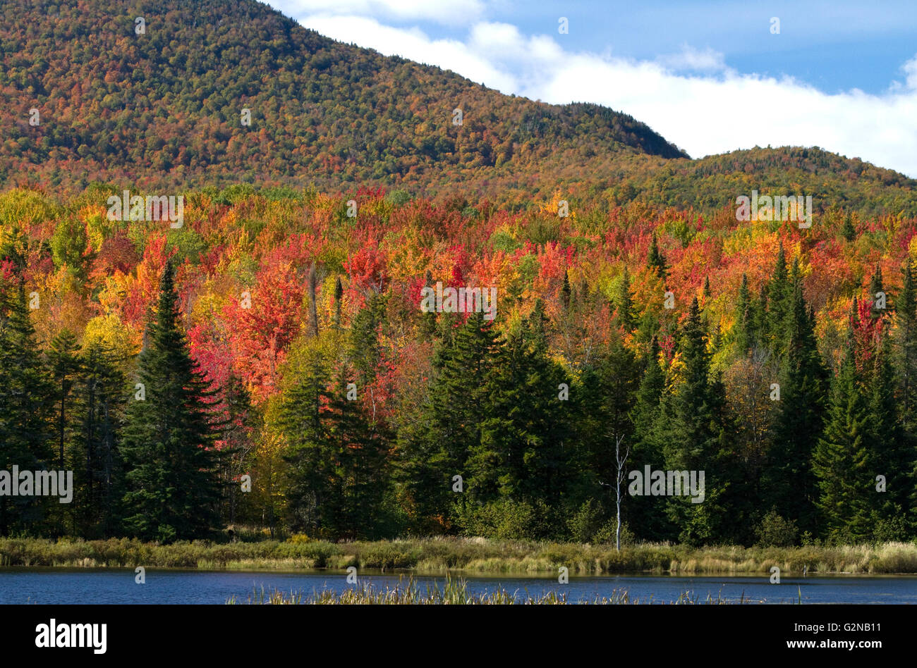 Fall foliage at McAllister Pond in Orleans County, Vermont, USA. - Stock Image