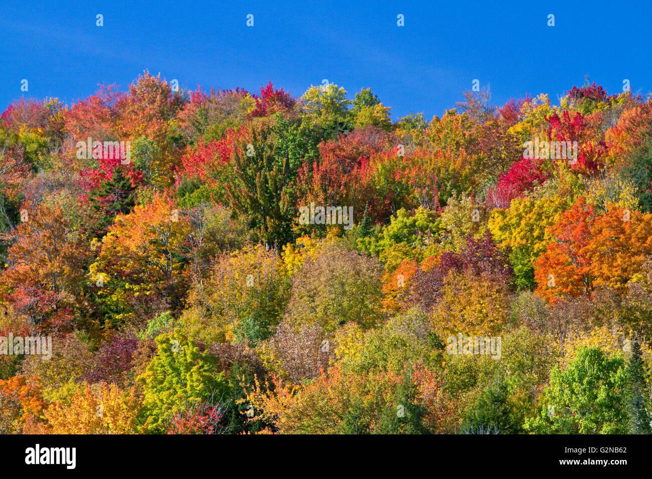 Fall foliage near Lake Elmore in Lamoille County, Vermont, USA. - Stock Image