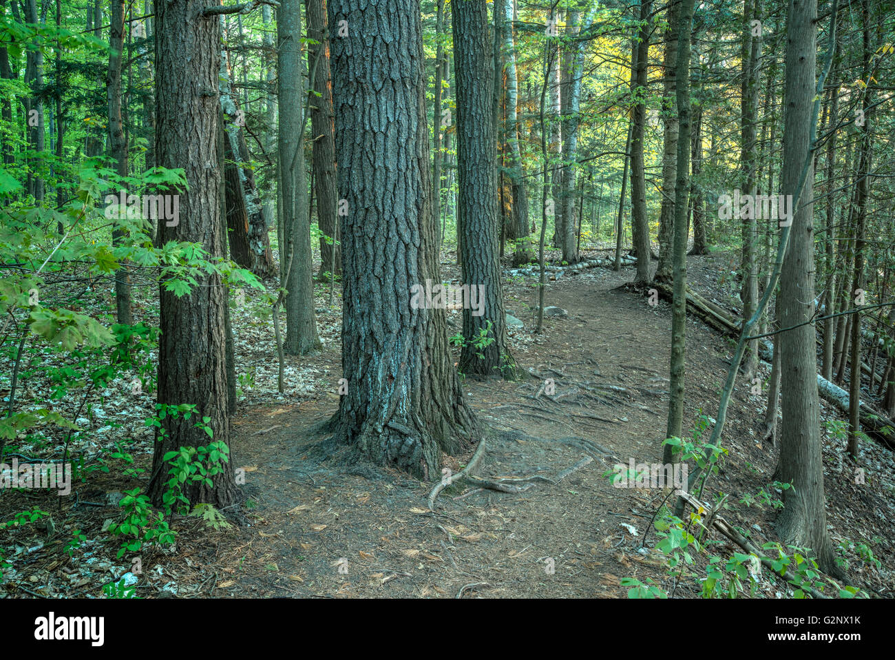Hiking Trail in a Forest - Stock Image