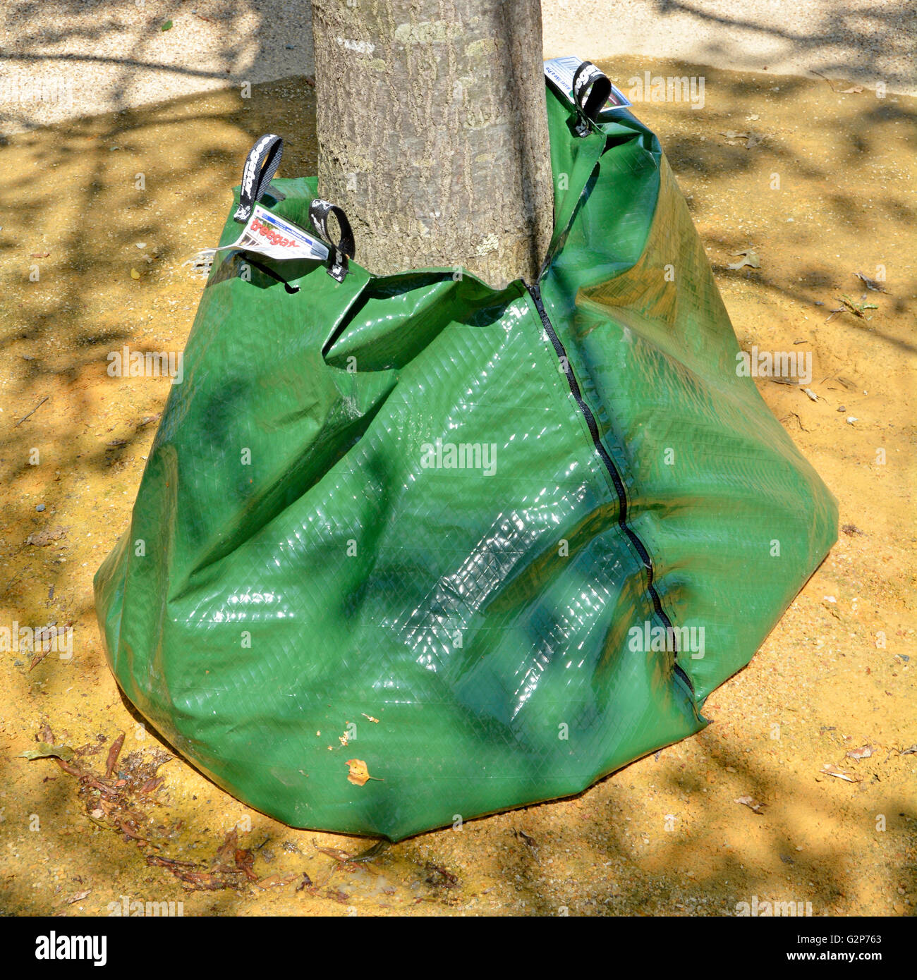 Treegator slow release plastic water bag at the bottom of new planting of trees in Queen Elizabeth Olympic Park - Stock Image