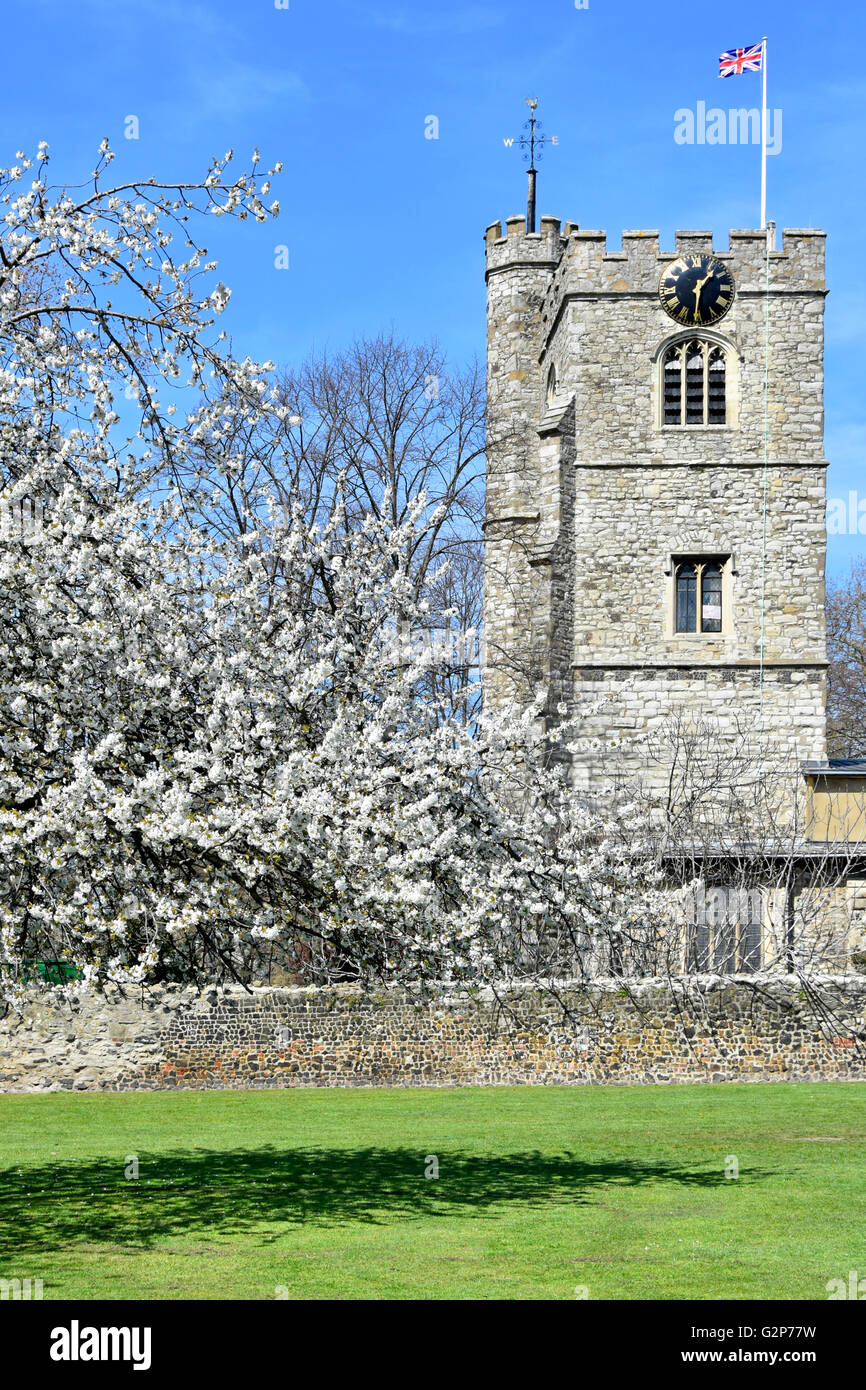 Spring blossom & St Margaret's Church tower The Abbey Church within grounds of Barking Abbey in London Borough - Stock Image