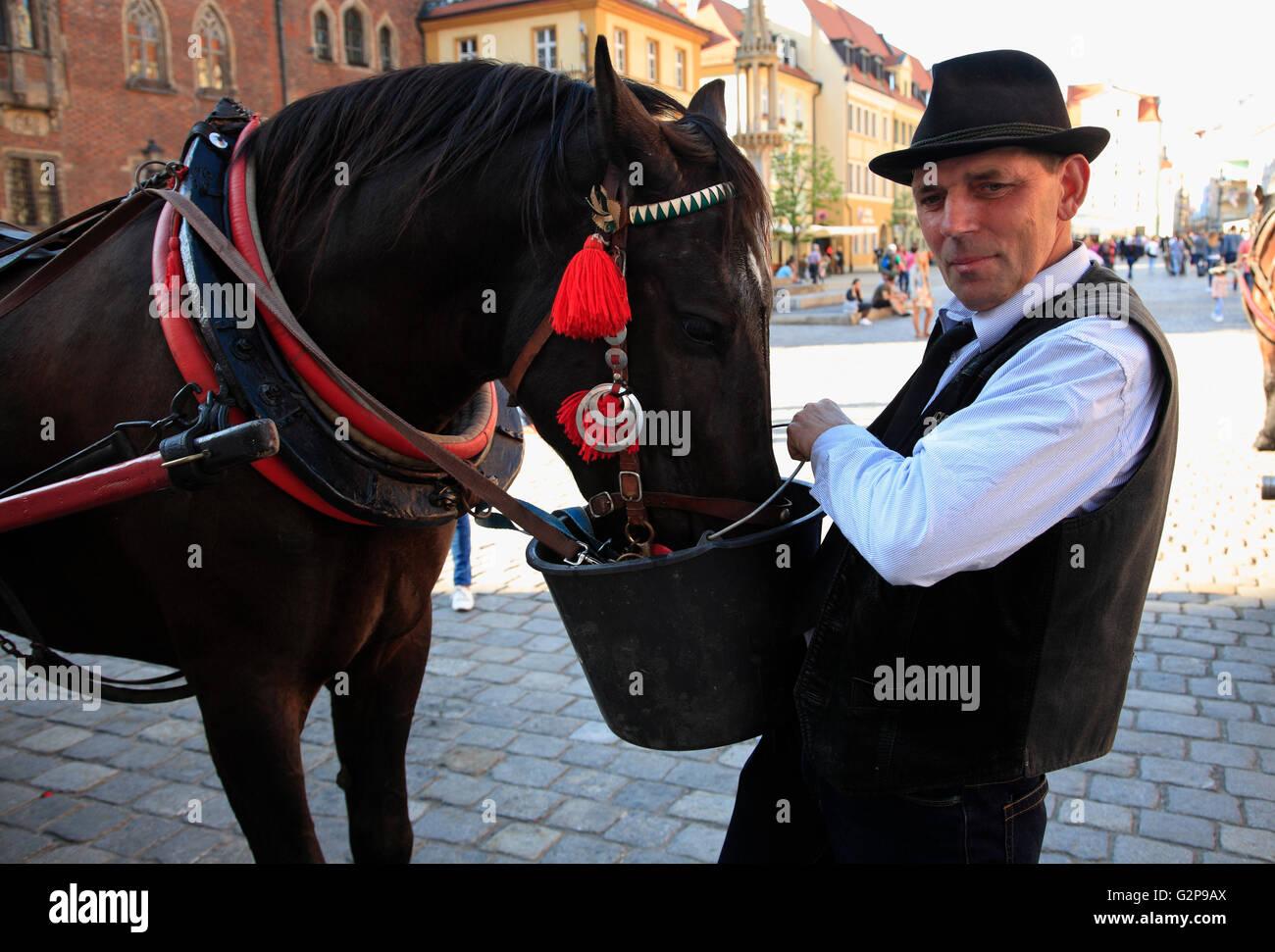Carriage horse at Market square Rynek, Wroclaw, Silesia, Poland, Europe - Stock Image