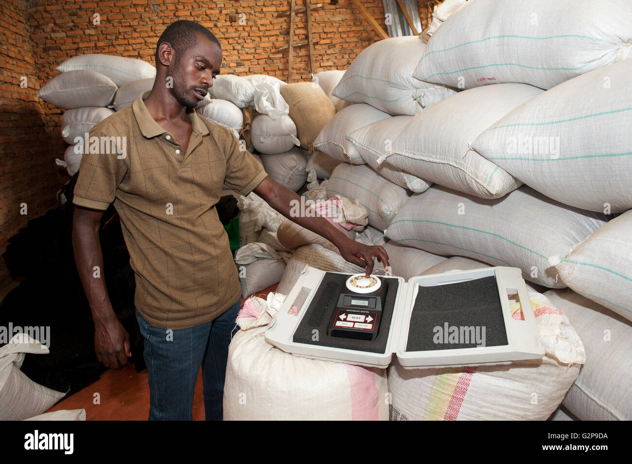 Coffee merchant with a moisture testeing device to check on quality of his coffee. Rwanda. - Stock Image