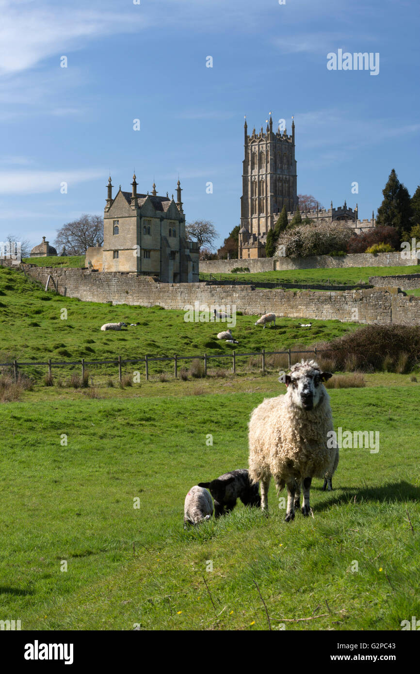 St James' Church and sheep, Chipping Campden, Cotswolds, Gloucestershire, England, United Kingdom, Europe - Stock Image