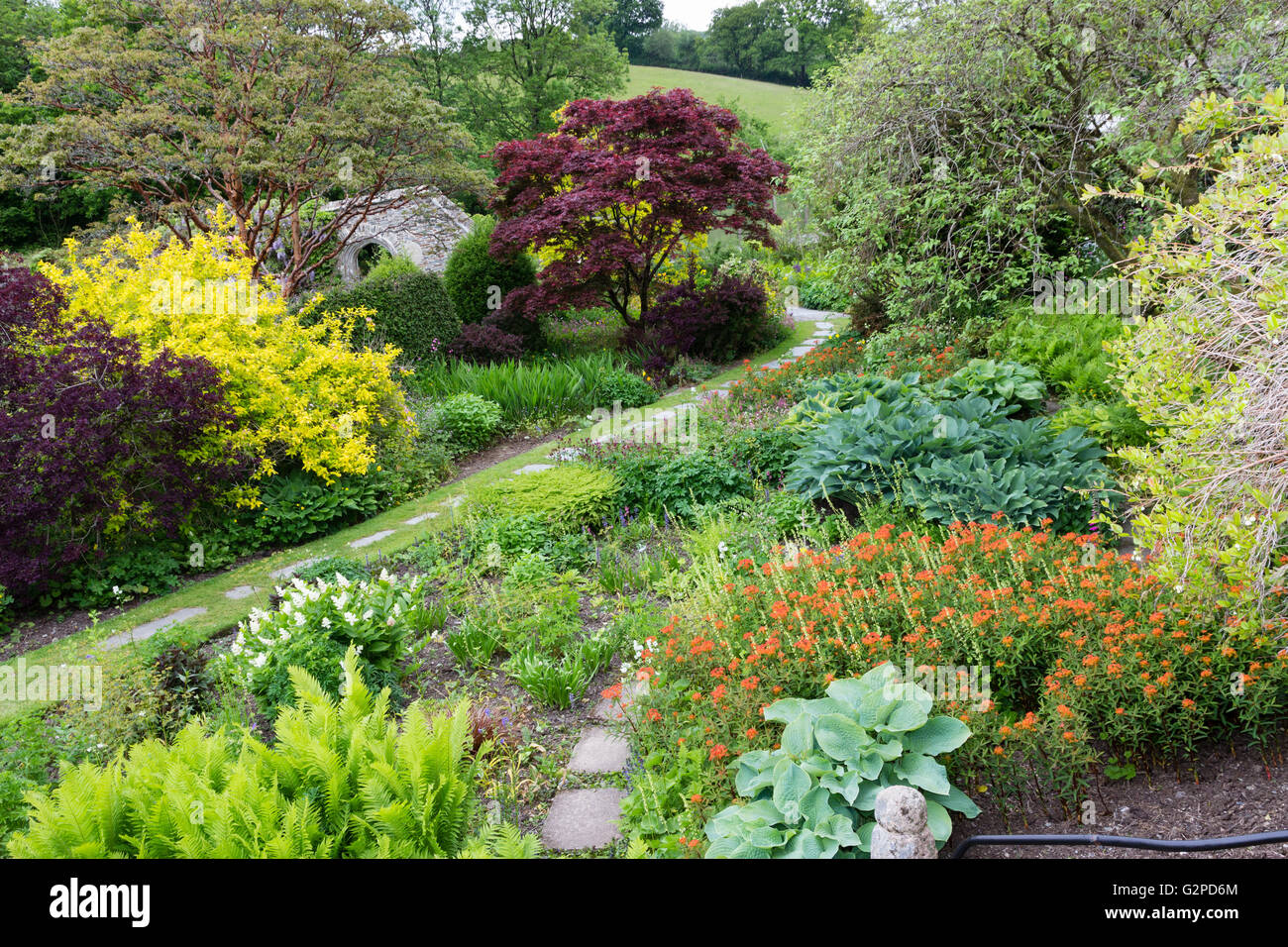 Foliage and floral display at the start of summer in the walled garden, the Garden House, Devon, UK - Stock Image