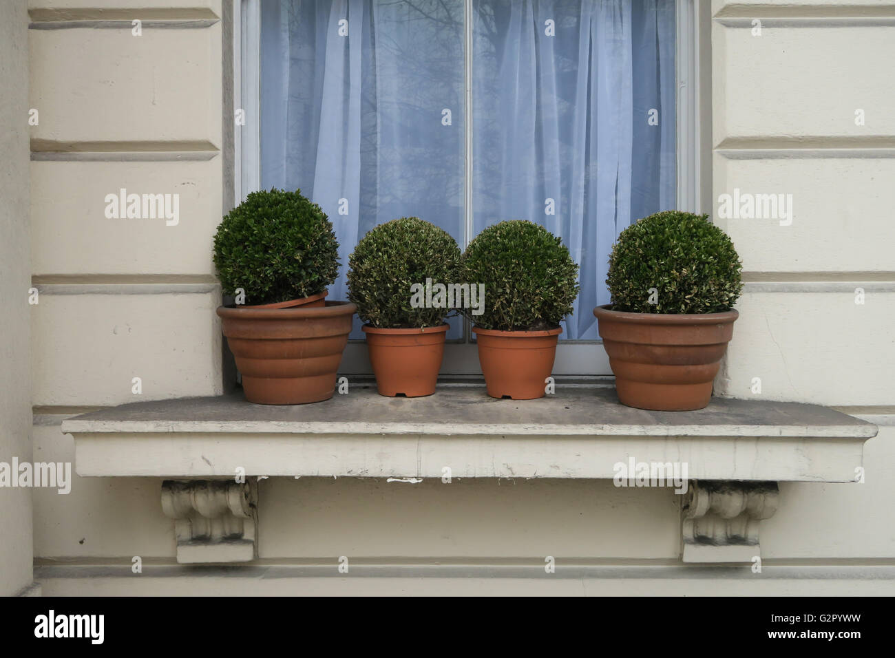 small round bushes in plant pots on windowsill - Stock Image