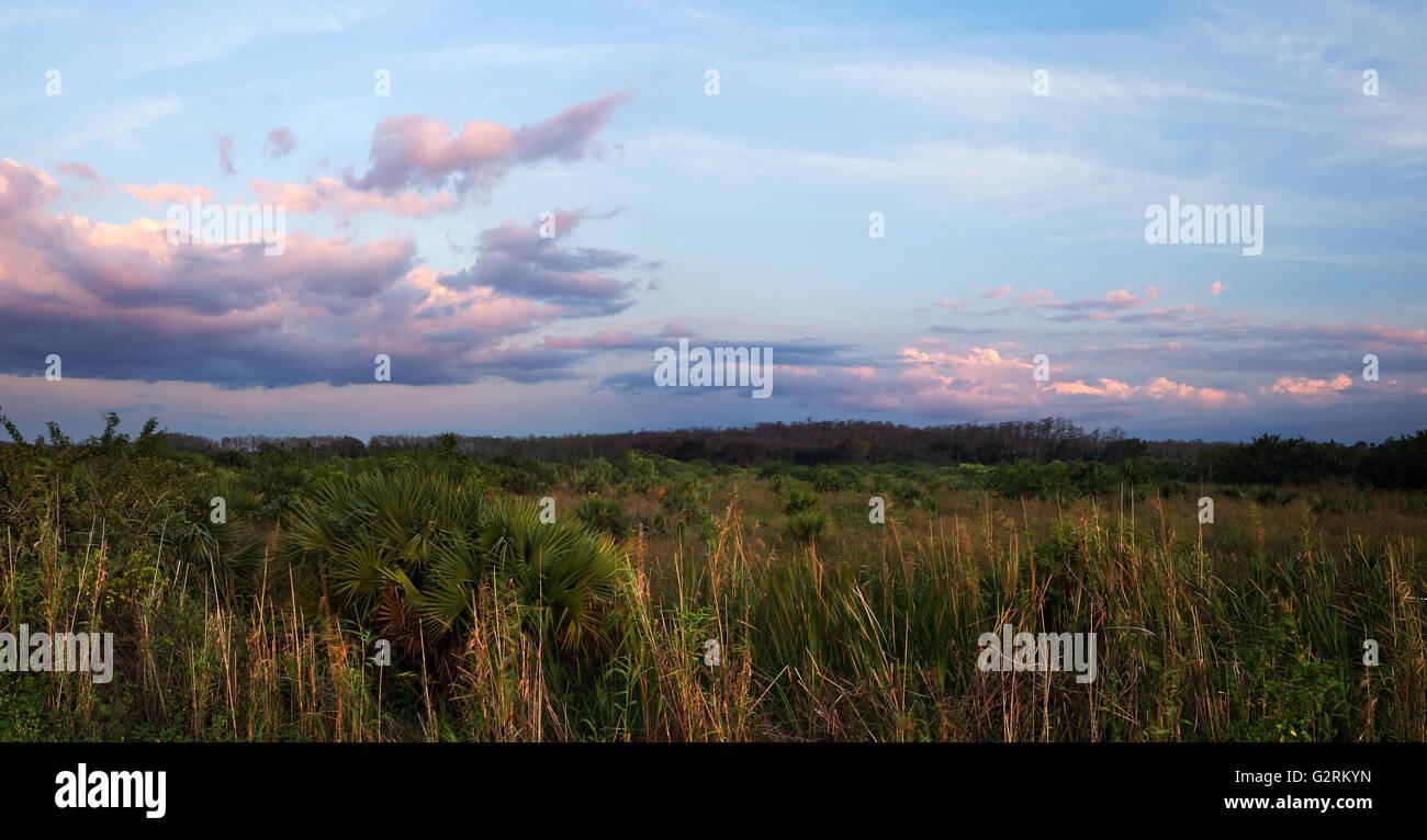 A peaceful calm suset over Florida Everglades sawgrass prairies - Stock Image