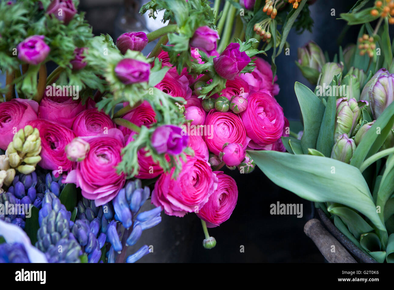 Bouquet of pink ranunculus with tulip Stock Photo