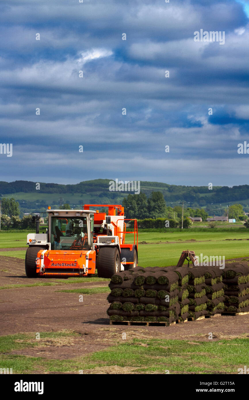 Turf Growing in Burscough, Lancashire, UK - Stock Image