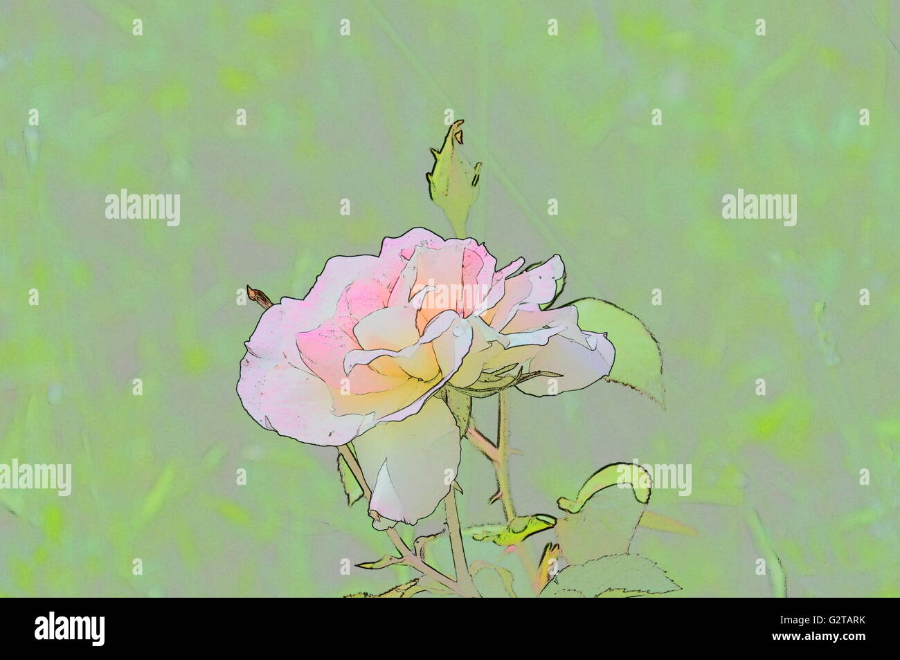 Digital art color sketch flowers Stock Photo