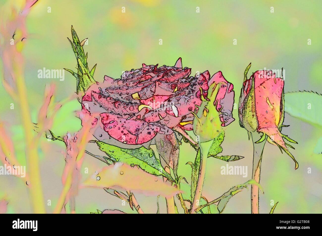 Digital art color sketch flowers rose Stock Photo