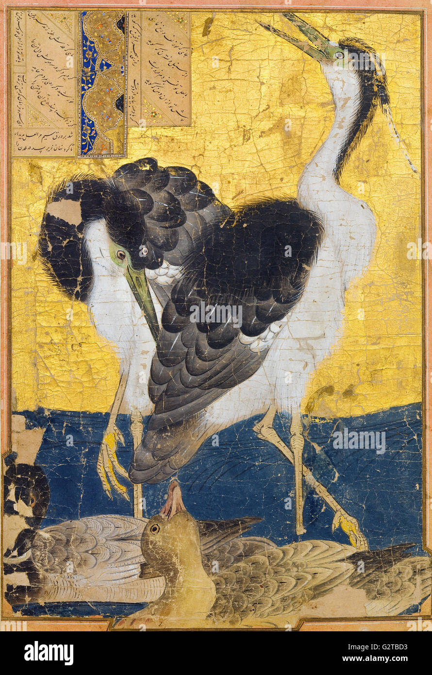 Unknown, Iran, 14th Century - Two Herons with Ducks - - Stock Image