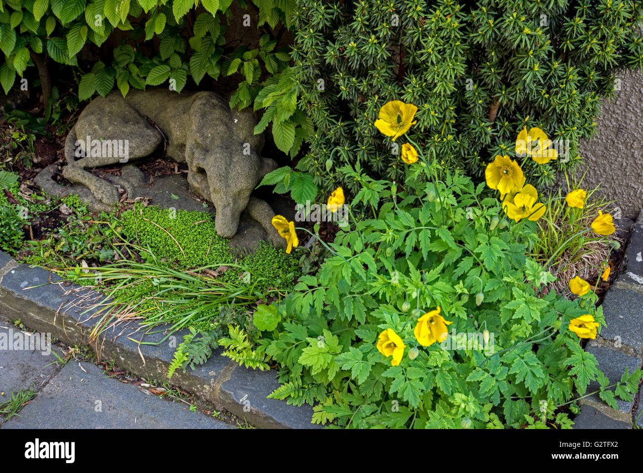 A stone sculpture of a sleeping dog next to some Icelandic poppies in Circus Lane, Stockbridge, Edinburgh, UK. - Stock Image