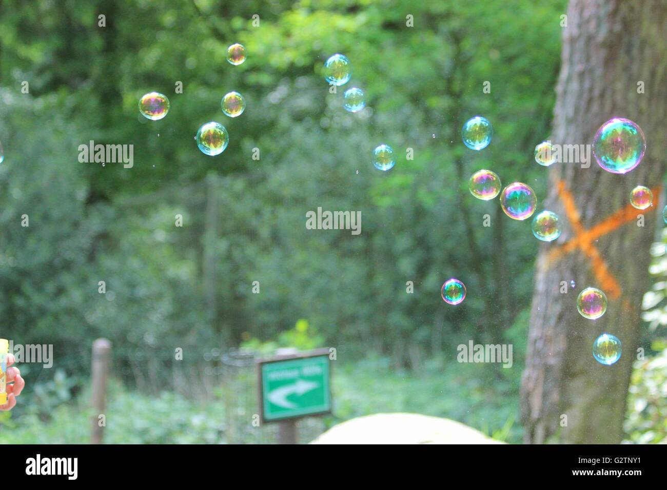 Bursting bubbles in the forest - Stock Image