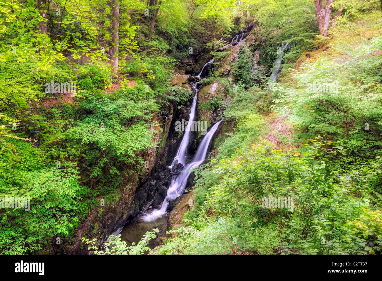 Ambleside, Stock Ghyll Force, Lake District, Cumbria, England, UK - Stock Image